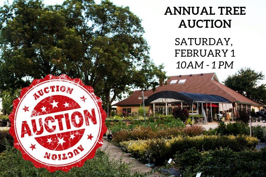 TreeAuction2020
