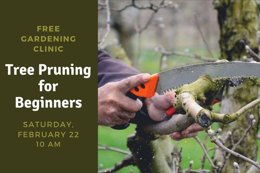 WEB-Pruning2020