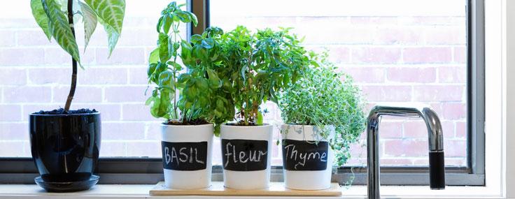 Herbs in the Kitchen Window