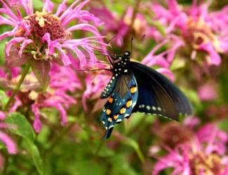resized butterfly