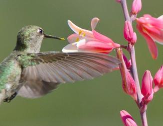 resized hummingbird