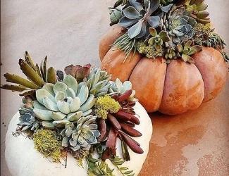 PumpkinBYOB