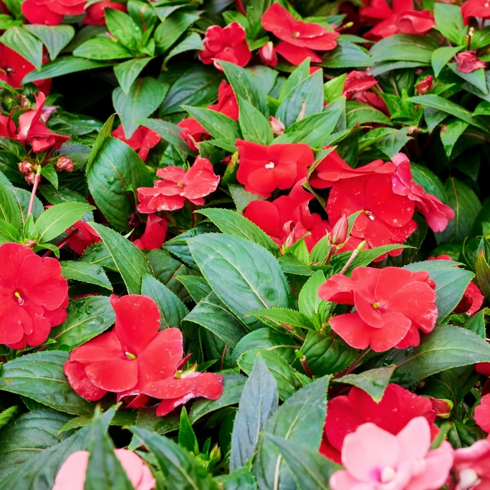 Annuals & Flowering Plants in Frisco, TX